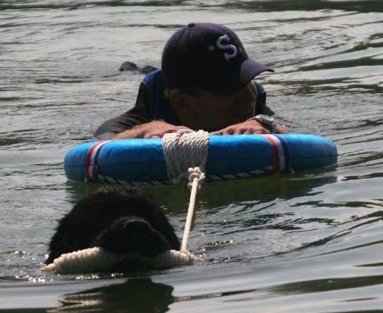 newfie-pulling-swimmer-water-rescue-test